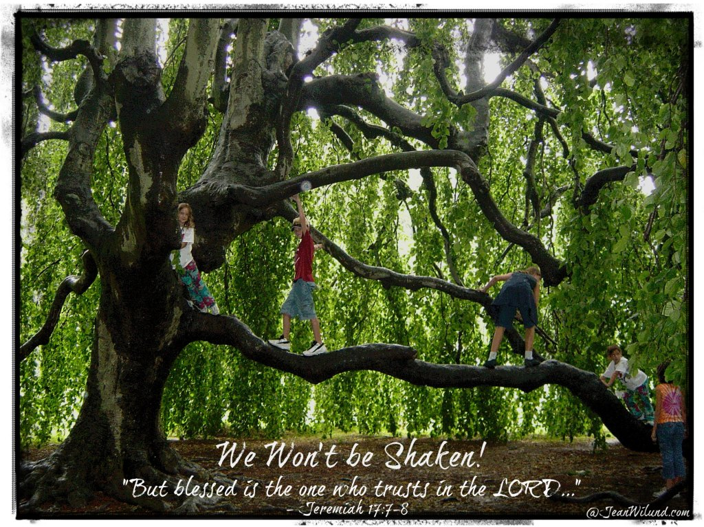 "Click photo to view video: Music Monday: ""We Won't Be Shaken!"" by Building 429 ~    ""Like a tree planted by the water . . . "" ~ Jeremiah 17:7-8"