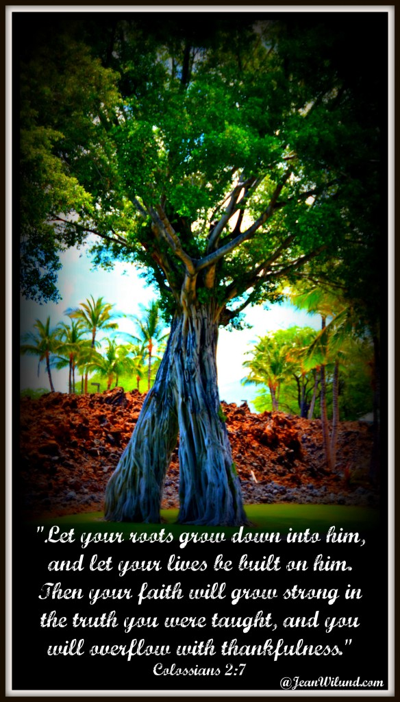 Not Every Tree Falls in a Storm. (Colossians 2:7) Praise Picture -- Let Your Roots Grow Down Into Christ (via www.JeanWilund.com)