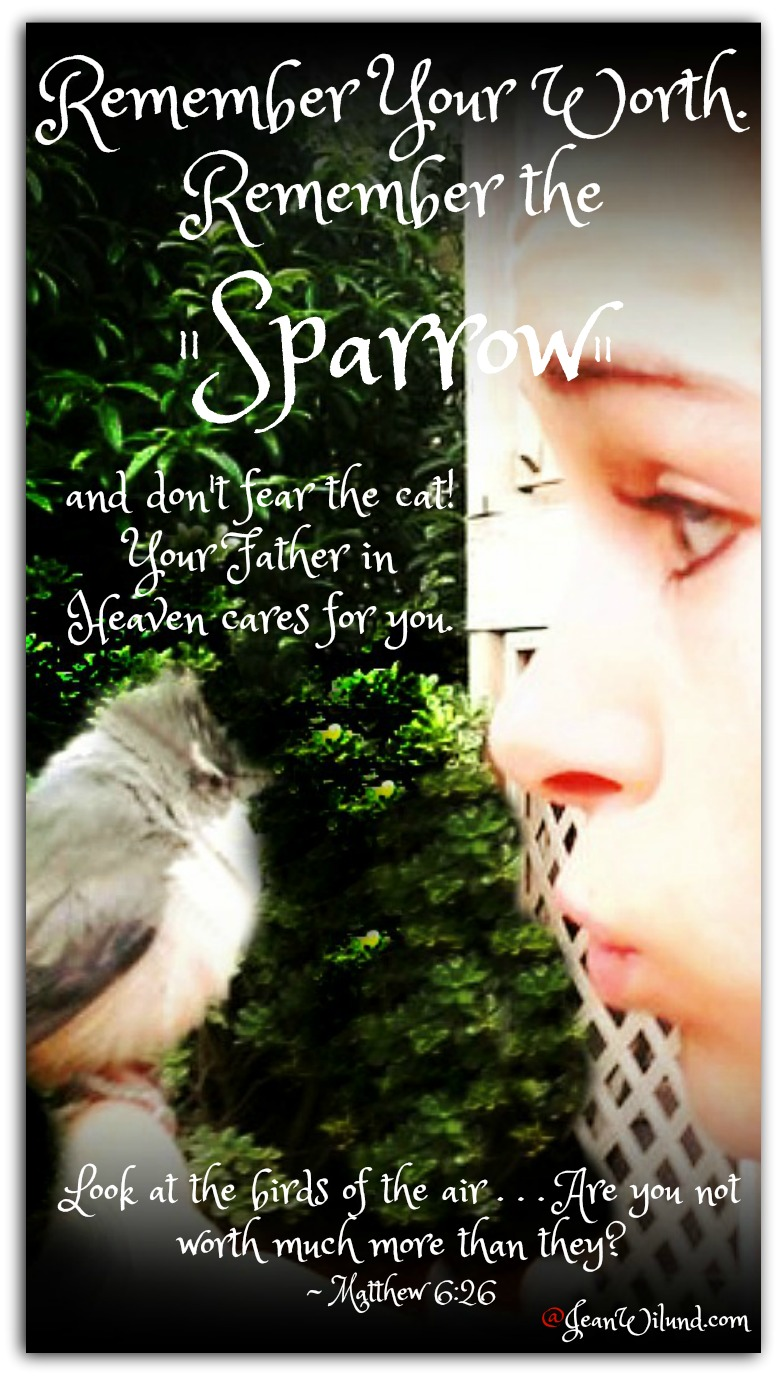 "Remember your worth. Remember the Sparrow. And don't fear the cat. Your Father cares for you. Watch the music video of Jason Gray's song ""Sparrow"" via www.jeanwilund.com"