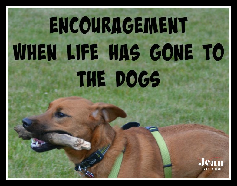 "Need Encouragement When Life Has Gone to the Dogs? Visit Me at ""Inspire A Fire"" Today"